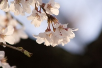 Img_4598a