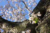 Img_5370a