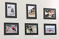 Img_7294a