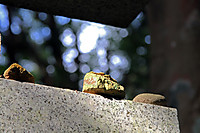 Img_4511a