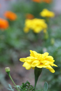 Img_1940a
